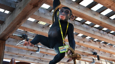 Monkey statue hanging from Busted Coconut's ceiling